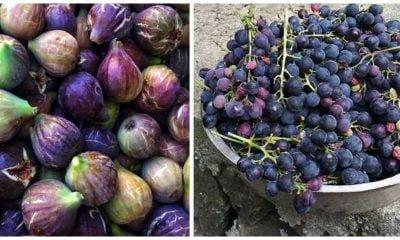 Sonbahar'da Çaykara için iki sebep: İncir ve üzüm