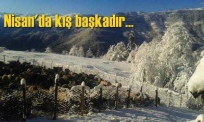 Çaykara'da Nisan sonu kar baskını