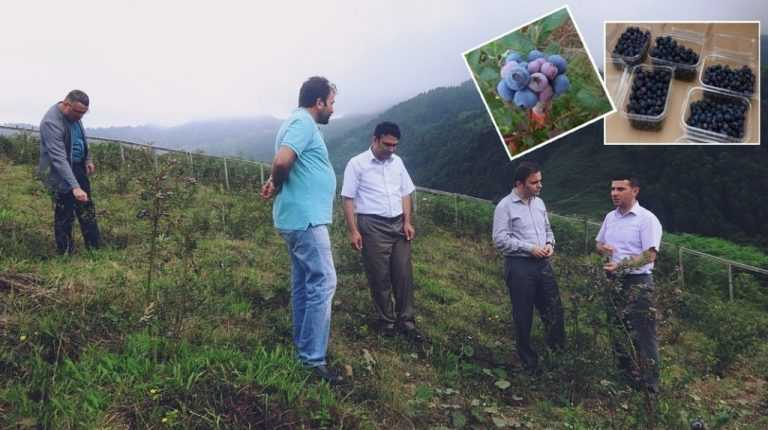 Erkovan Çayırbaşı'nda likarba bahçesini inceledi