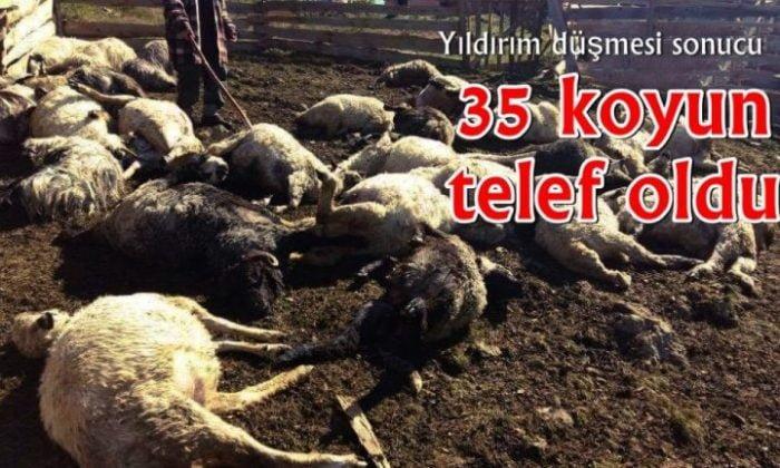 Üzerlerine yıldırım düşen 35 koyun telef oldu