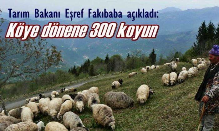 Köyüne geri dönen çiftçiye 300 koyun