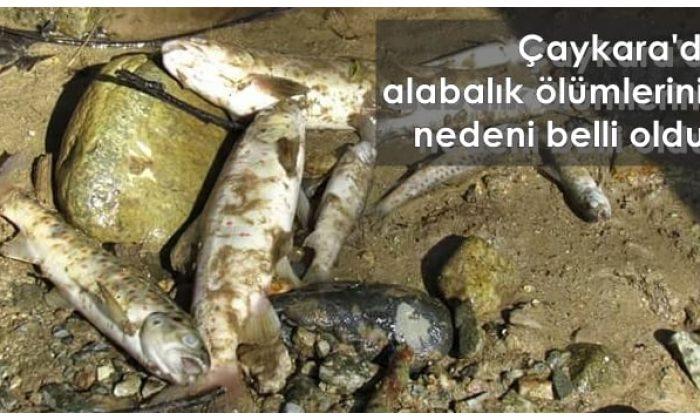 Köknar-Karaçam Vadisinde alabalıklar neden öldü?