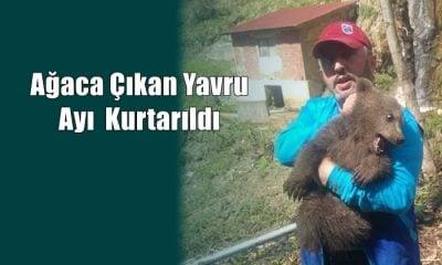 Vatandaşlardan korkup ağaca çıkan yavru ayı kurtarıldı