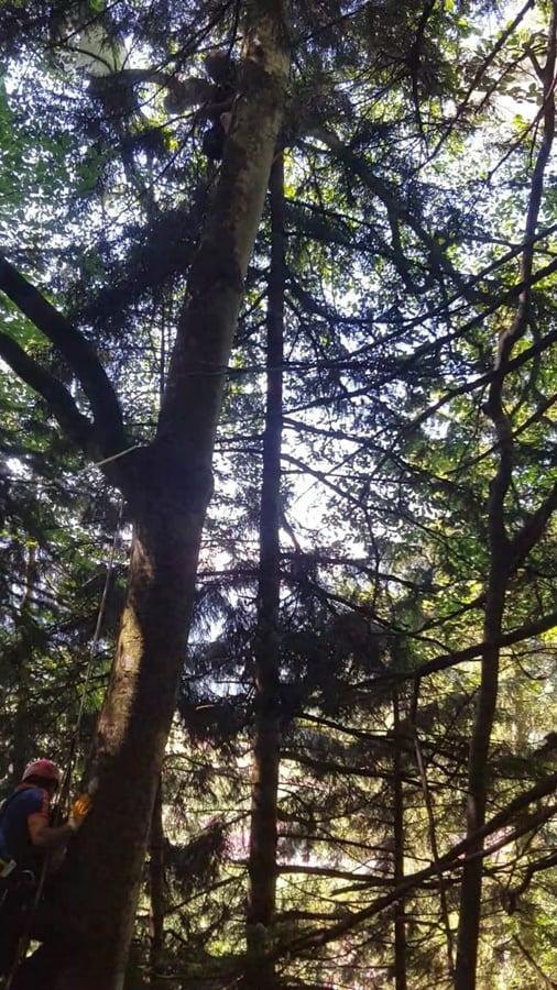 Uzungöl'de yamaç paraşütçüsü iniş esnasında ağaca asılı kaldı. 2