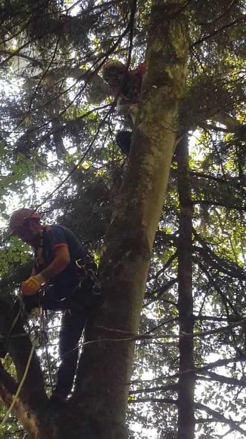 Uzungöl'de yamaç paraşütçüsü iniş esnasında ağaca asılı kaldı. 3