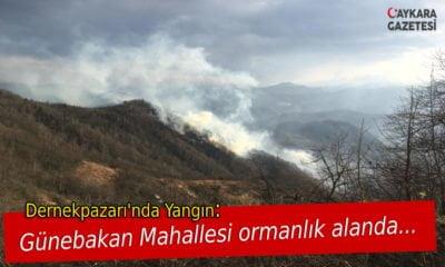 Holo Günebakan'da Orman Yangını