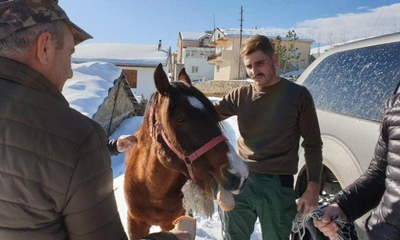 Ölüme terk edilen at kurtarıldı 1