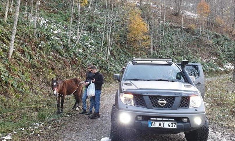 Ölüme terk edilen at kurtarıldı 2