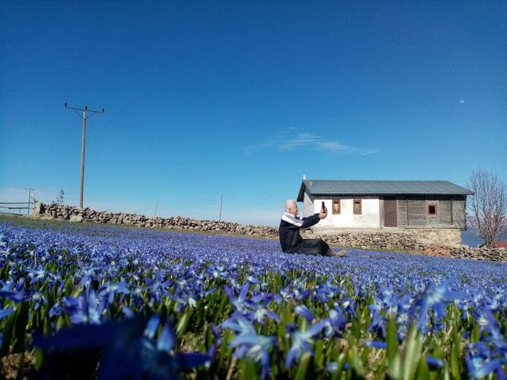 Çaykara'nın mavi çiçekleri açtı 1