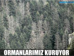 Ormanlarımız Kuruyor 1