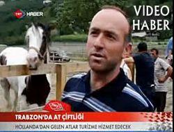 TRT Çaykara'daki At Çiftliğini Haber Yaptı