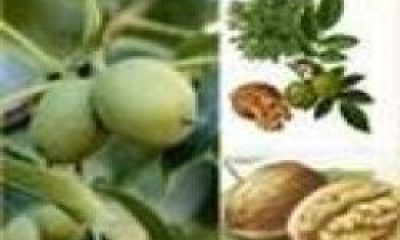 Bitkilerdeki Püf Noktalar