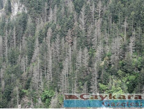 Ormanlarımız Kuruyor 2