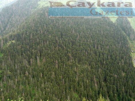 Ormanlarımız Kuruyor